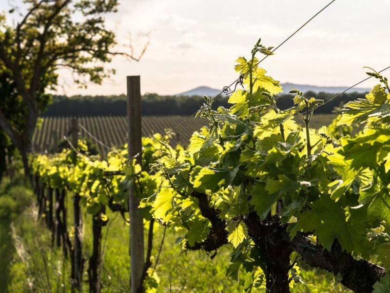 Wine in Umbria. Tastings and tour of the Umbrian cellars