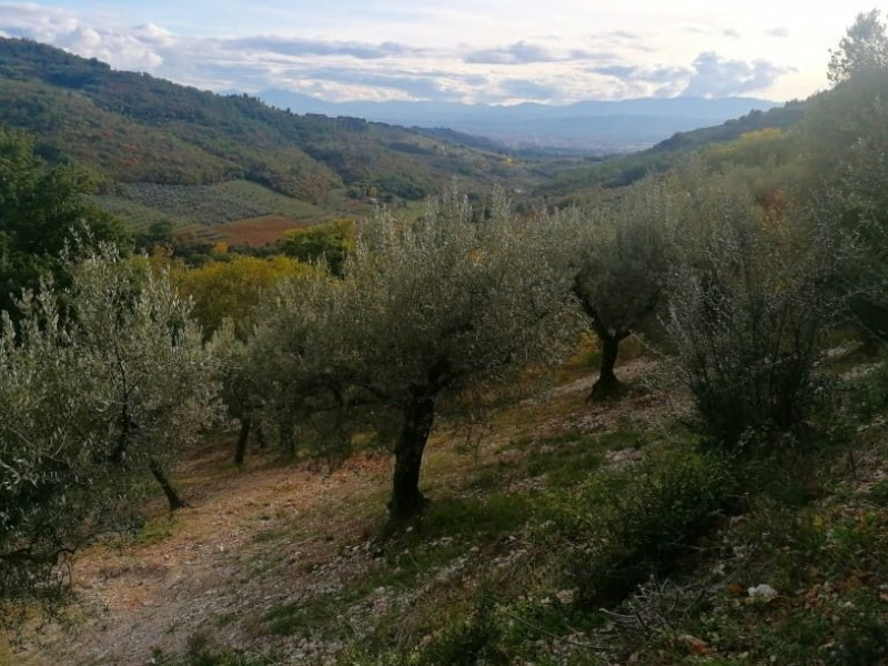Sagrantino Wine Tour - Full day trip from Assisi