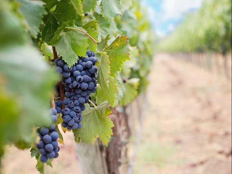 Degustazione di vini e tour in una delle più antiche cantine di Montefalco