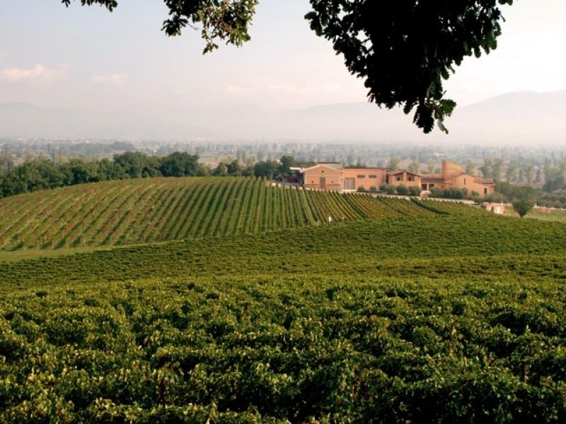 Wine tour in Umbria - Full day tour around the Sagrantino area