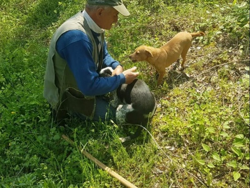 Truffle hunting in Umbria - A special day in a farm with lunch