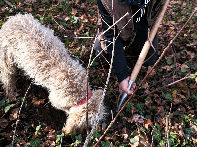 NATURE AND SPORTS: The secreto of the Truffle - Truffle hunting in Umbria