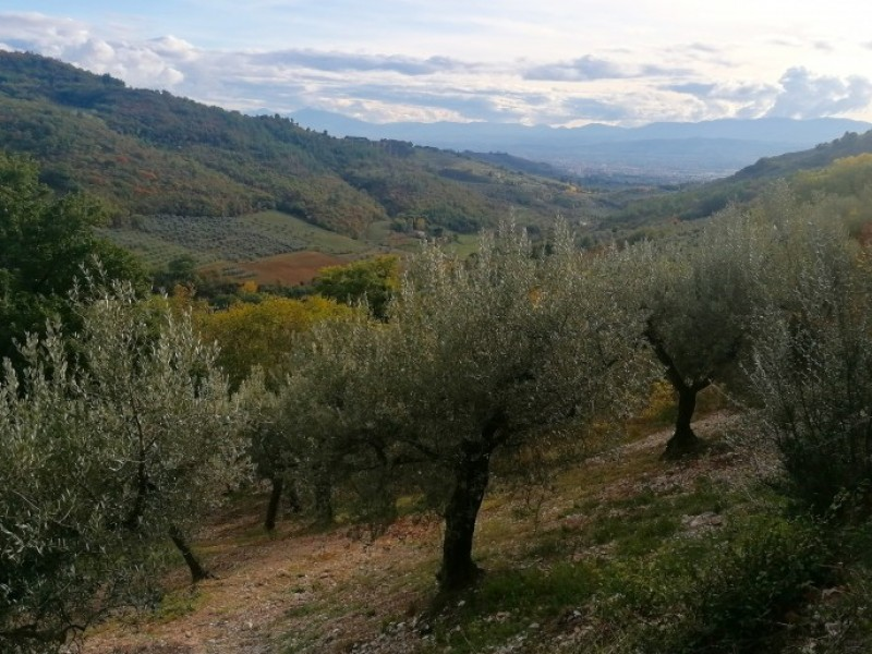 Trekking in Umbria ad Assisi. 4 giorni in Umbria scoprendo il Monte Subasio