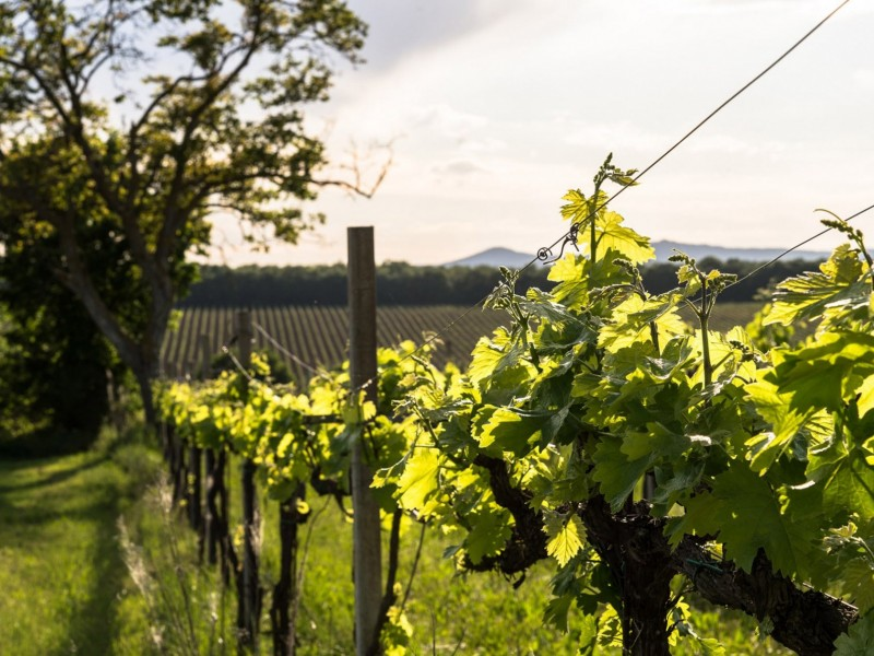 Visita e degustazione in cantina in Umbria. Per gli amanti del vino