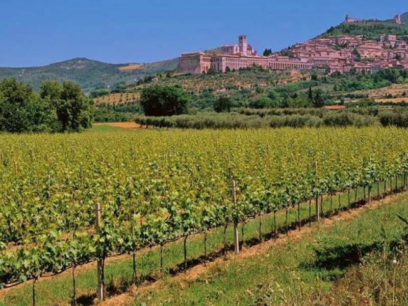 Passeggiata tra i vigneti e degustazione in veranda ad Assisi