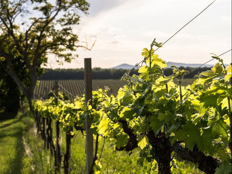 Winemaker for a day in Assisi. Wine tour Assisi, visit and tasting