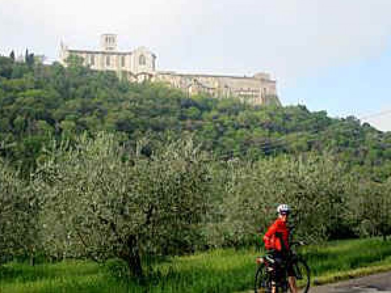 Bike and Wine day tour